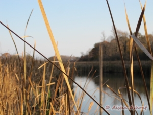 Lynde Shores Marsh